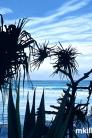 Coast at dawn 1st August 2014